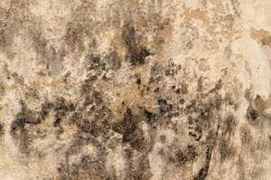 Picture of mould caused by condensation, call Atlantis to find a solution